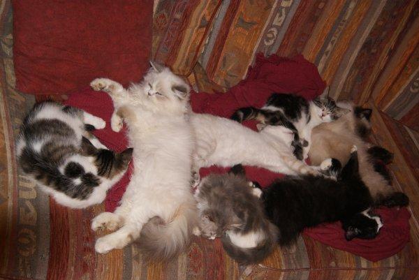 petite sieste entre chats