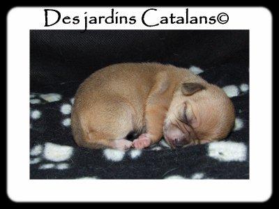 Gesmì Des Jardins Catalans....