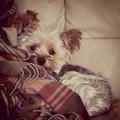 Ton Blog Canin ♥