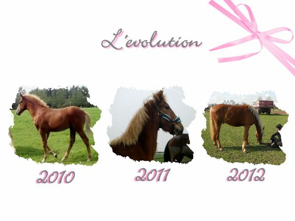 Evolution du bébé