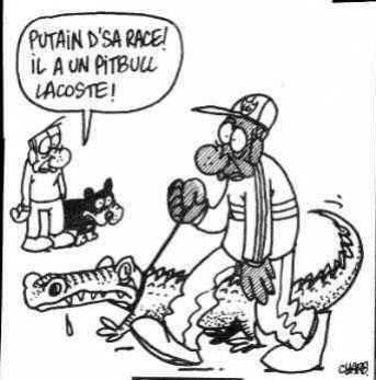 svp!!!!!! ou xk g px avwr 1 dog pitbull