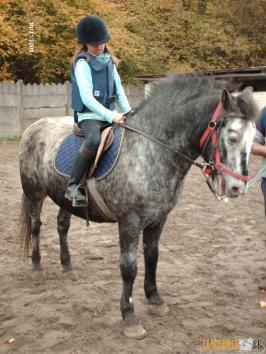 poney 1m40 a vendre