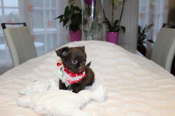 de jolis petits colliers pour bébés chiens
