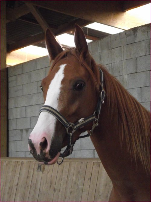 """""""Etre aimé par un cheval ou par un autre animal doit nous remplir d'humilité et de reconnaissance, car nous ne le méritons pas."""""""