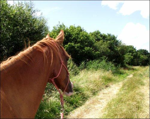 """""""Le cheval porte son cavalier avec vigueur et rapidité. Mais c'est le cavalier qui conduit le cheval. Le talent conduit l'artiste à de hauts sommets avec vigueur et rapidité. Mais c'est l'artiste qui maîtrise son talent."""""""