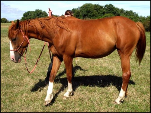 « Le cheval a la perception comme il a la sensation, la comparaison et le souvenir. Il a donc le jugement et la mémoire. Il a donc l'intelligence !»