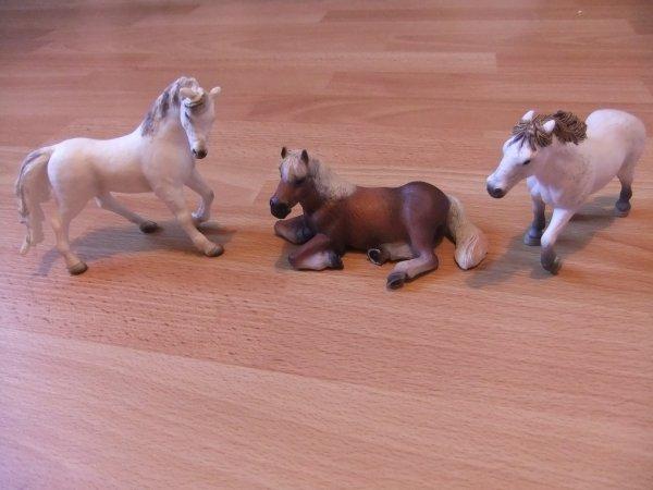 Des new chevaux au club !!!