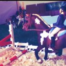 Photo de horse-love-schleich
