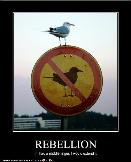 Avez-vous réussi à vous rebeller de votre rebellion ?