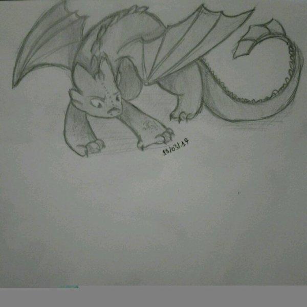 Mon dragon chouchou