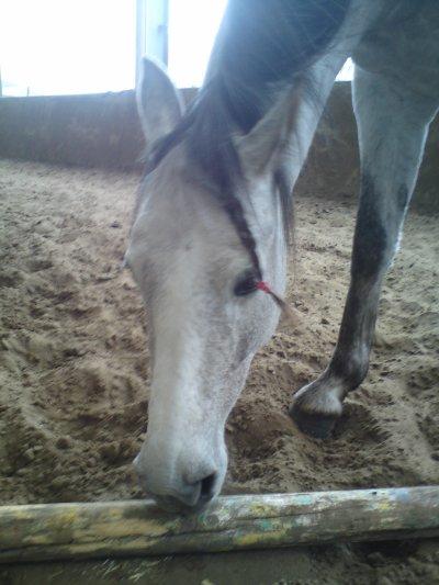 Ma petite Roze :-))