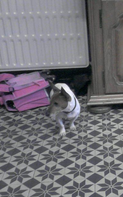un des chien:pepere
