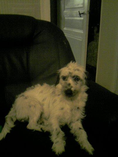 le deuxieme chien: lilou