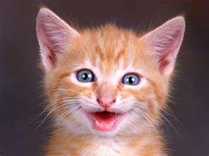 Dans la vie soyons joyeux !!!