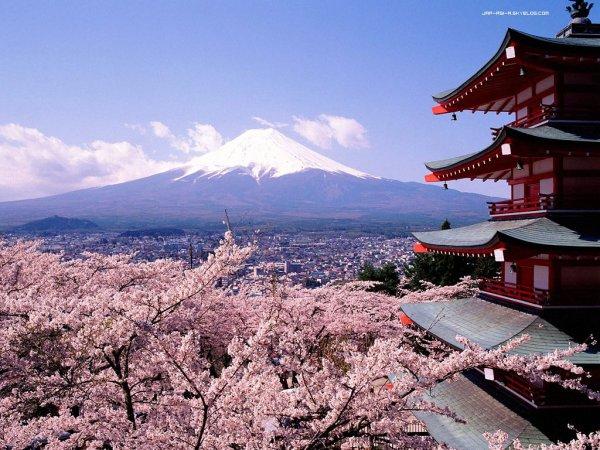 Découverte du Japon et de sa capitale, Tokyo.