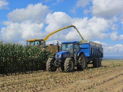 Ensilage de maïs chez un voisin avec une Ensileuse New Holland FR9040