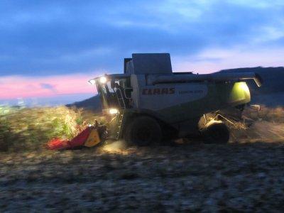 chantier de récolte de maïs grain avec une Lexion 570 !