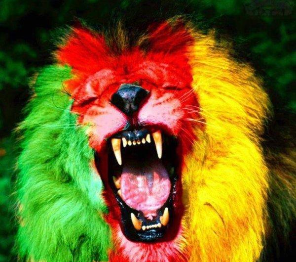 Lions indomptables, l'équipe fait sa mue