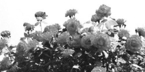 Hatred rose