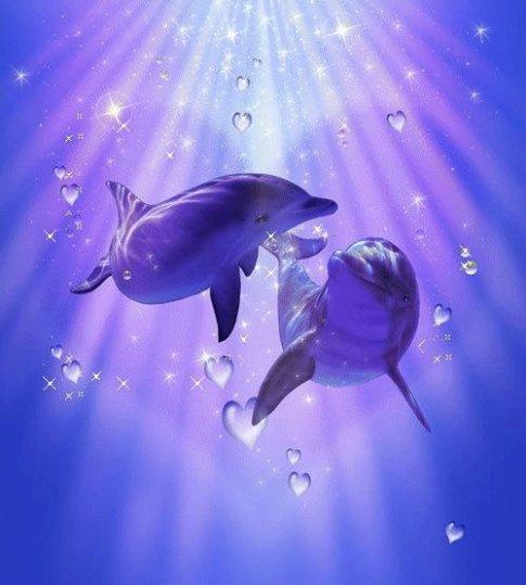 Les dauphins Animals preferes