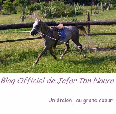 Bienvenue Sur le blog Officiel de Jafar Ibn Noura