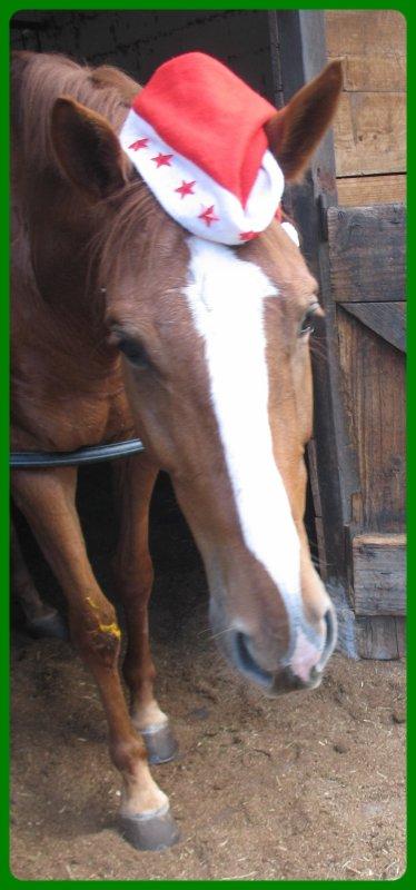13 décembre 2009 - arbre de noël poney