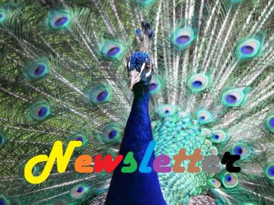 Newsletter~