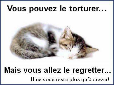 Protégeons les animaux~ ♥