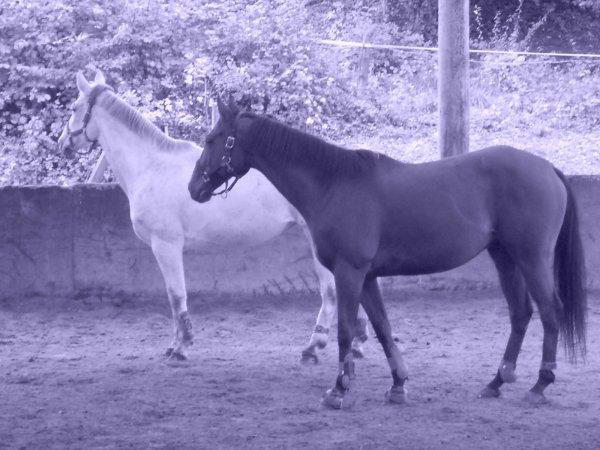 Mes deux chevaux d'amour !