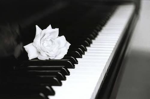 La vie c'est comme le piano, il y a le noir et le blanc, il faut jouer les deux pour avoir une belle mélodie. 🎹🎵🎶🎶