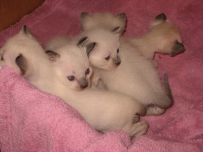 3 males et 2 femelles