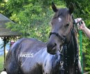 Photo de equus-angels