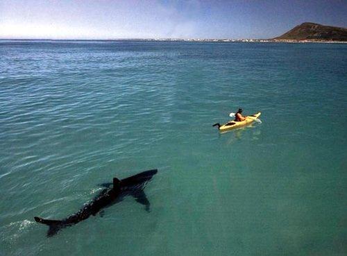 Pour les pêcheurs en kayak