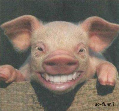 Cochon trop mignon just so funny - Image de cochon mignon ...