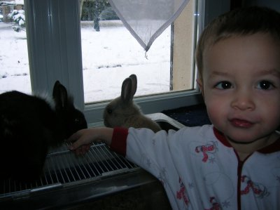 Téo et ses lapins, Canaillou et Chipie