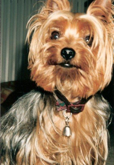 Mon petit chien....