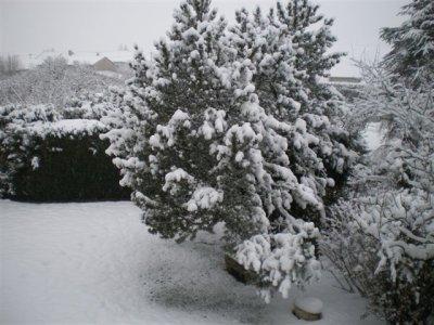 La neige arrive! Un petit élan s'est invité!