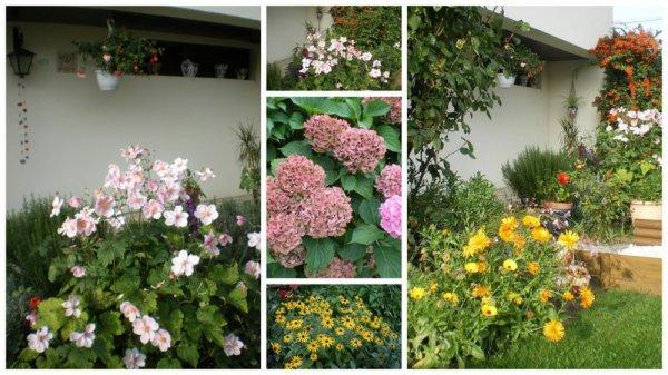 toujours les fleurs en automne