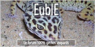 forum dédié au gecko léopard