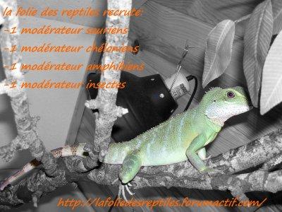La folie des reptiles recrute!