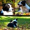 Photos d'automne avec Twixou <3