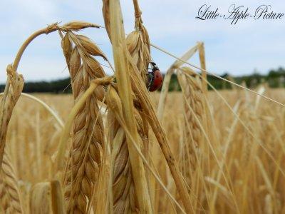 """"""" Il faut semer son blé partout. """" Louis Scutenaire"""