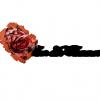 fleur-des-flammes