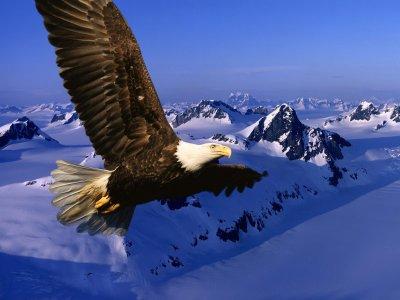 L'aigle vole seul ; ce sont les corbeaux, les choucas et les étourneaux qui vont en groupe. »