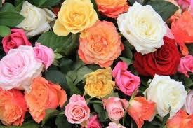 Les roses......