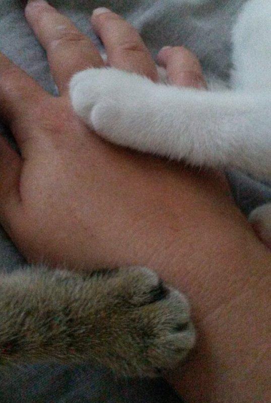 tjrs la dans la maladie mes chatonnes :-)