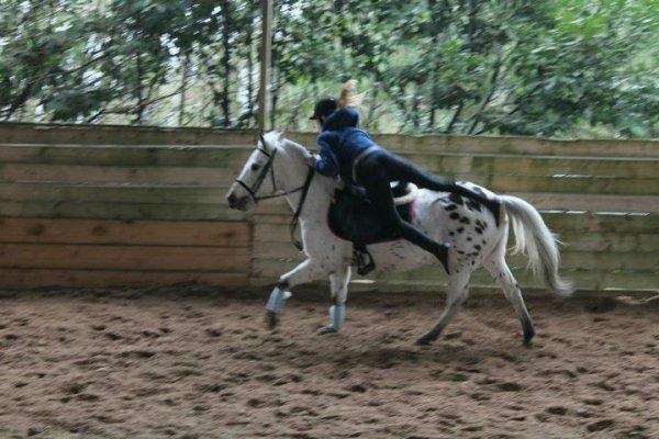 Pony games :D