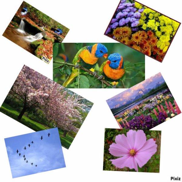 photos sur le printemps