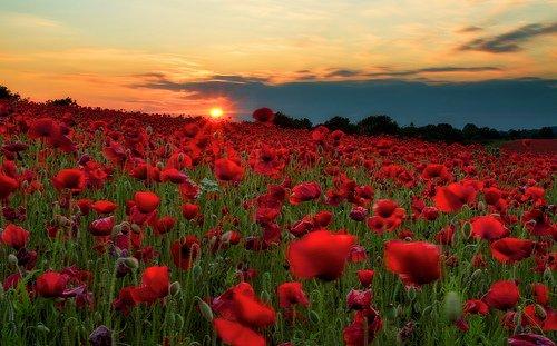 Qu'on se souvienne....et pour les familles qui se souviennent...