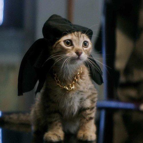 Yoooo...meow remix !